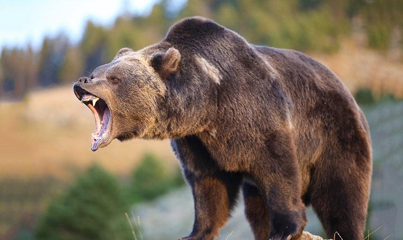 Mercato Orso